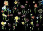 Çiçek Sergisi