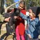 Keçiler mi Yaramaz Yoksa Çocuklar mı?