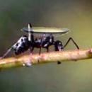Lens Duası ve Karınca