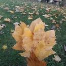 Sarı Yapraklar
