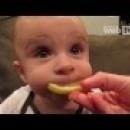 İlk Defa Limon Yiyen Bebekler