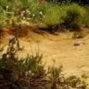 Minuscule Karıncalar