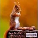 Sincap'ın Dilinden Yemek Duası