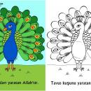 Tavus Kuşu'nu Yaratan Allah'tır (Okul Öncesi Boyama Etkinliği)