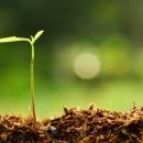 Tohum ve Hayatlanması