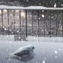 Yalnız Kuş
